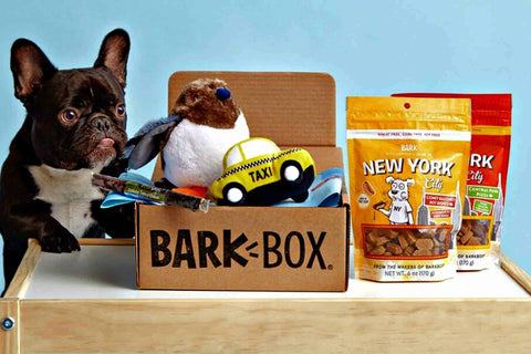 Best subscription boxes for dogs barkbox