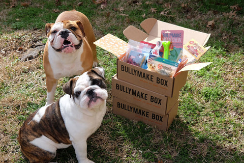 Best subscription boxes for dogs bullymake box