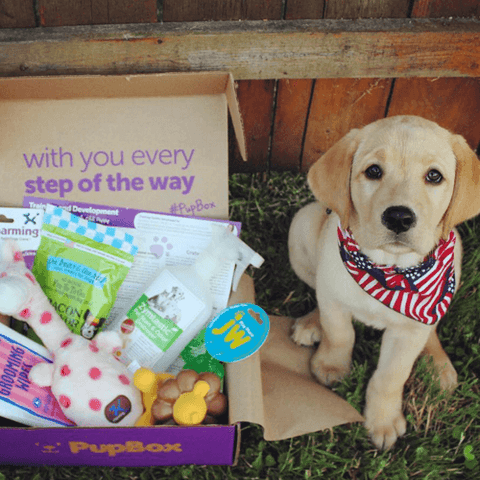 Best subscription boxes for dogs the pupbox
