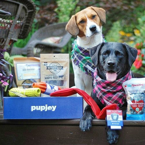 Best subscription boxes for dogs the pupjoy