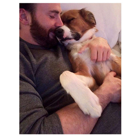 Celebrities who love their dogs chris evans and dodger patchwork pet dog blog