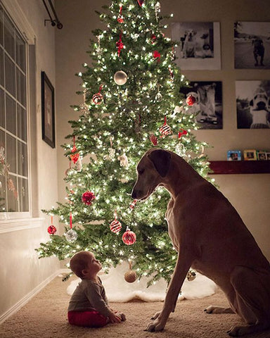 Christmas Card Ideas with your dog Patchwork pet dog blog dogs and babies christmas tree photos