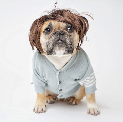 Creative Dog halloween costumes on instagram bad hair day french bulldog costume