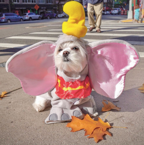 Creative Dog halloween costumes on instagram dumbo   costume