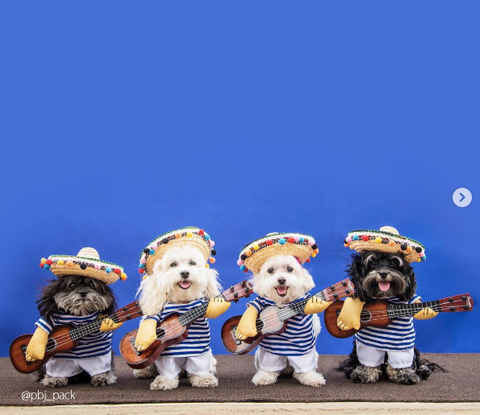 Creative Dog halloween costumes on instagram mariachi band  costume