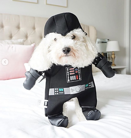 Creative Dog halloween costumes on instagram starwars  costume