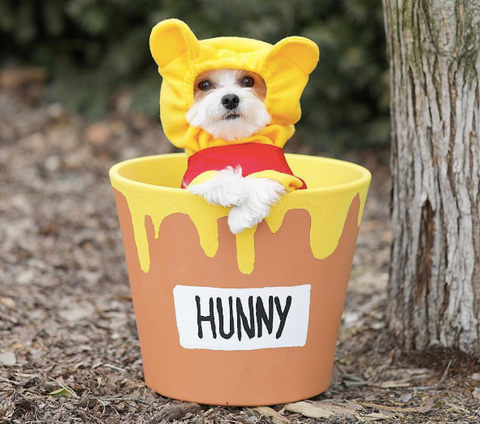 Creative Dog halloween costumes on instagram winnie the pooh  costume