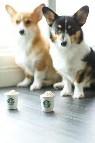 DIY Pumpkin Spice Latte Recipe for Dogs Patchwork Pet Dog Blog
