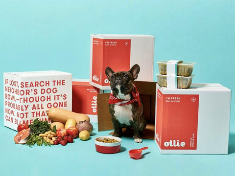 dog food delivery services ollie dog food patchwork pet dog blog