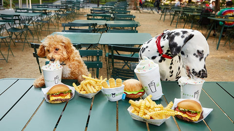 Dog friendly guide to NYC dog friendly restaurants shake shack in New York City Patchwork pet dog blog