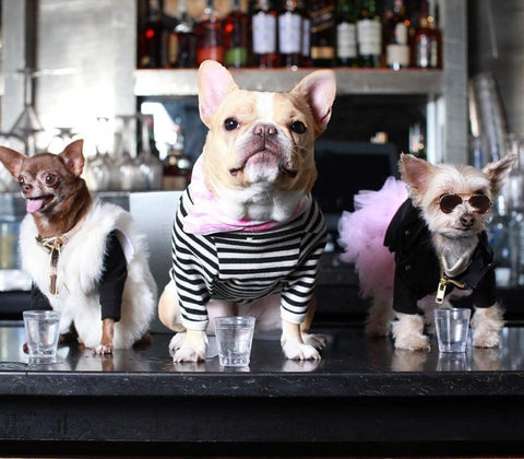 Dog friendly guide to NYC pet friendly hotels in New York City Patchwork pet dog blog