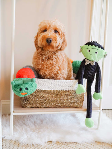 Patchwork Pet Halloween and Holiday Plush dog toys Muttley FRankenstein