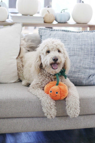 Patchwork Pet Halloween and Holiday Plush dog toys Pumpkin rope toy