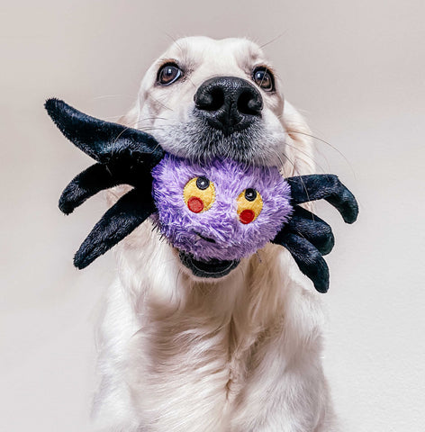 Patchwork Pet Halloween and Holiday Plush dog toys Spider Pricklet Ball Toy