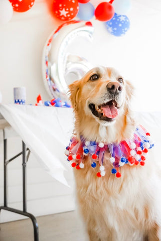 Tips for Creating a DIY dog birthday party mad pup life patchwork pet