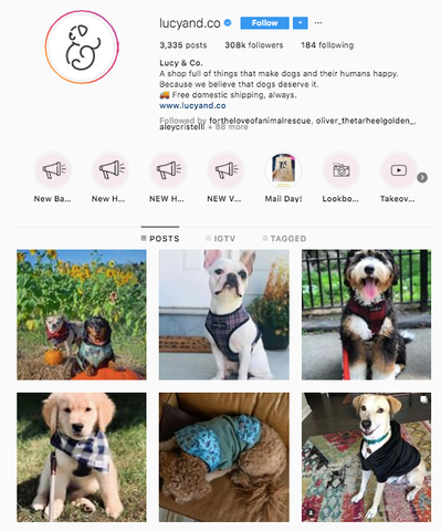 Lucy and Co Best women owned small business dog online boutiques patchwork pet dog blog
