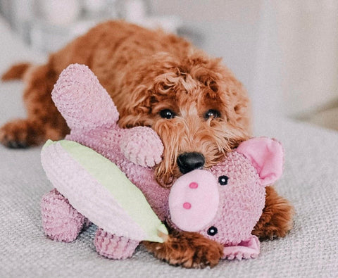 Patchwork Pet Dog Blog How to Make your dog instagram famous Ruby Rue Dood
