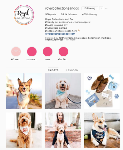 Royal Collections Co  Best women owned small business dog online boutiques patchwork pet dog blog