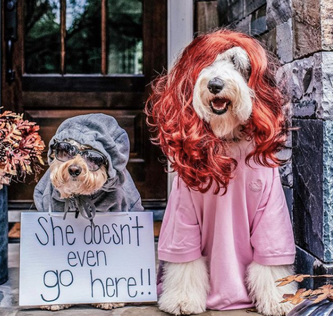 Creative Dog halloween costumes on instagram Meangirl the movie costume