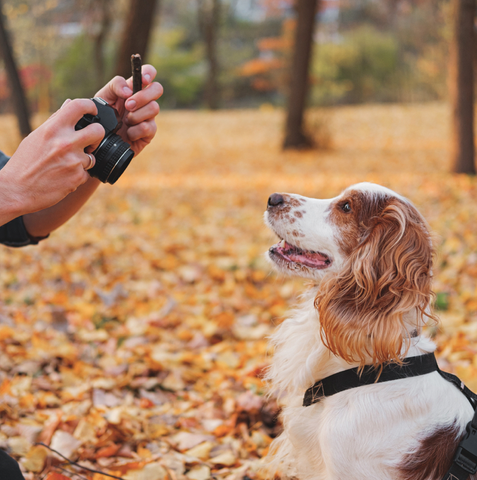 3 ways to capture better photos of your dog