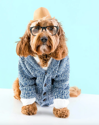 hipster halloween costume for dogs