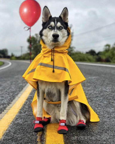 Spookiest Dog halloween costumes on instagram IT costume