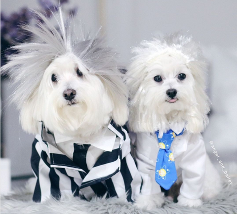 Spookiest Dog halloween costumes on instagram beetlejuice costume