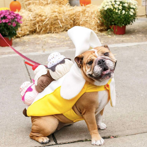 Spookiest Dog halloween costumes on instagram ice cream sundae hoboken girl blog