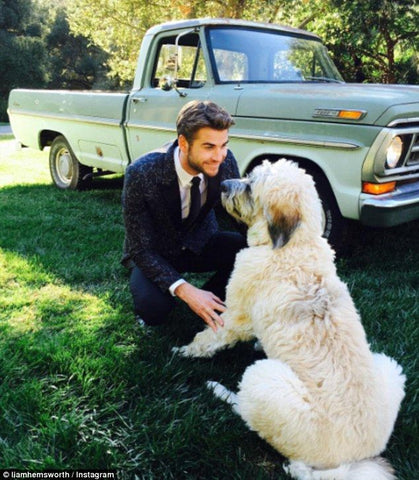 Liam Hemsworth and dog dora patchwork pet dog blog