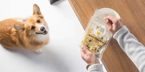 dog food delivery service nom nom now dog food patchwork pet dog blog
