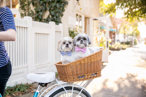 dog friendly travel guide to charleston crew lala dog boutique patchwork pet dog blog