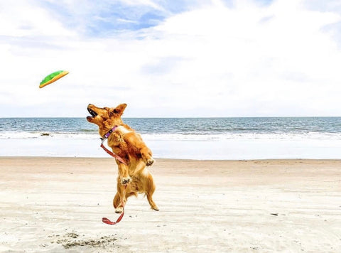 dog friendly travel guide to charleston and beaches patchwork pet dog blog