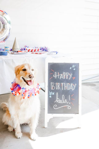 How to plan an epic dogs birthday party mad pup life