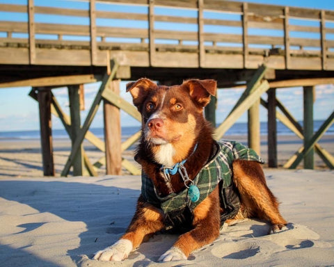 dog friendly guide to charleston folly beach dog friendly beaches in charleston