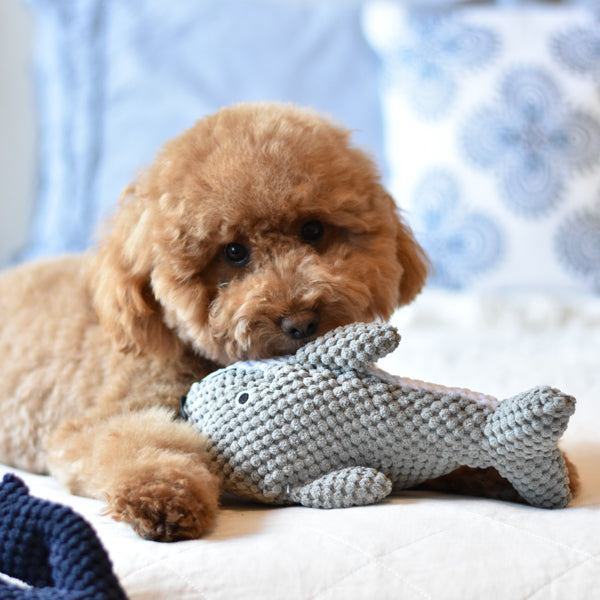 Patchwork Pet Dolphin Plush nautical Dog Toy with Goldendoodle Dog