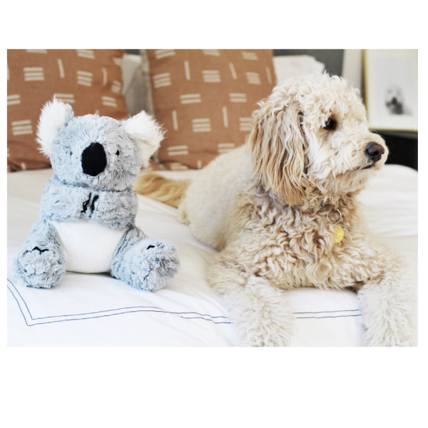Patchwork Pet Koala Plush Dog Toy with goldendoodle dog