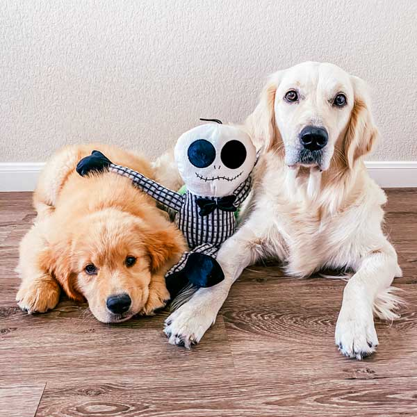 Halloween plush dog toys  patchwork pet dog toys