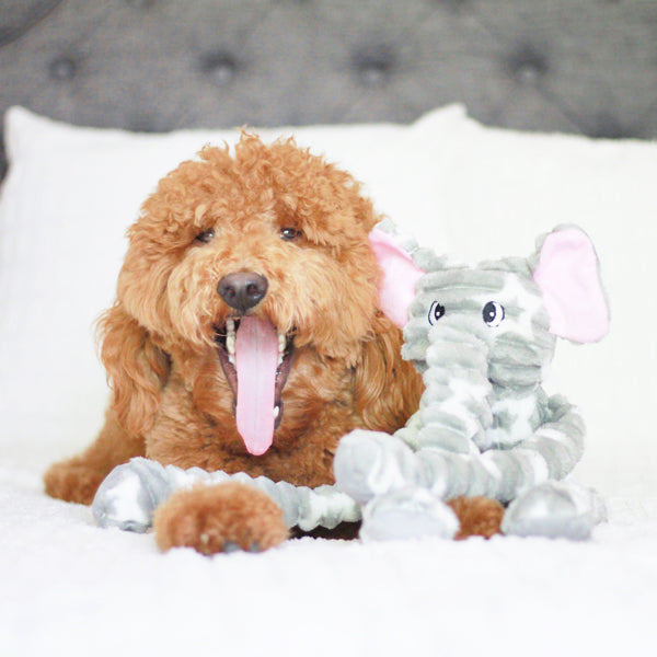 Patchwork Pet Tug Elephant Plush Dog Toy with Goldendoodle Dog