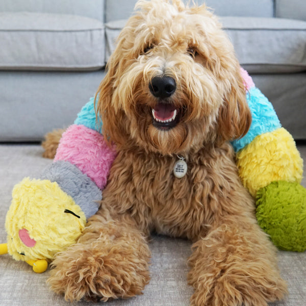 Patchwork Pet Plush Caterpillar Dog Toy with Goldendoodle Dog
