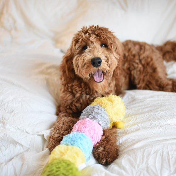 Patchwork Pet Plush Caterpillar Dog Toy with Labradoodle Dog