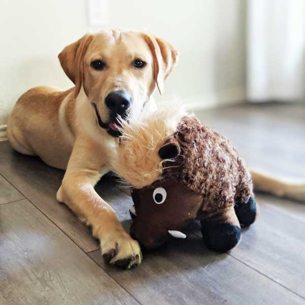 Warthog plush dog toy patchwork pet plush dog toys  with a labrador