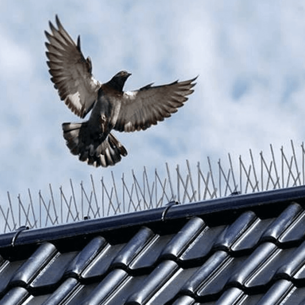 Stainless Steel Pigeon Spikes Bird Repellent
