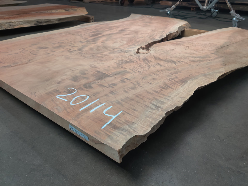 "Queensland Maple #20114 (78"" x 27"" - 51"" x 1.75"")"