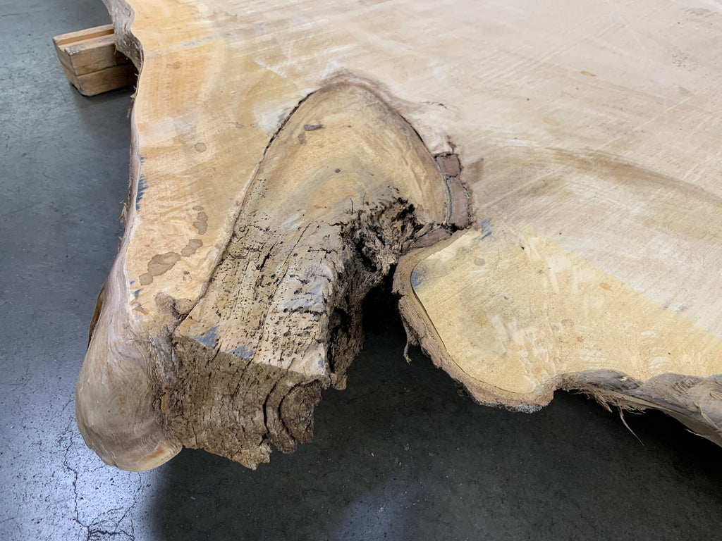 "Colorado Cottonwood #20830 (123"" x 32"" - 55"" x 3.125"")"