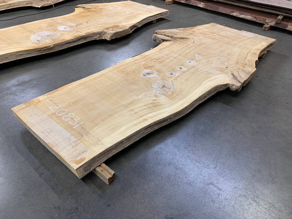 "Colorado Cottonwood #20831 (123"" x 33.5"" - 57"" x 3.25"")"