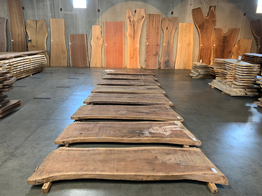 "Black Walnut Slab #10902 (100"" x 35"" - 45"" x 2.5"")"