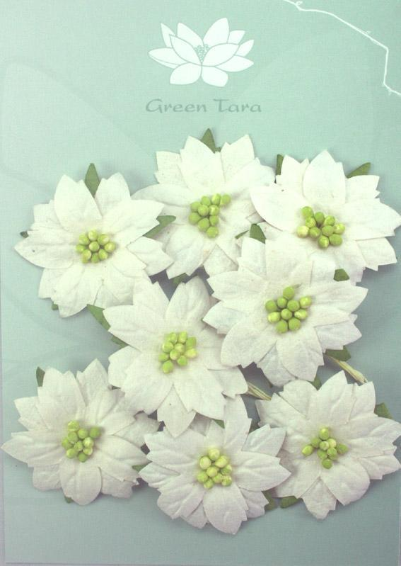 Scrapbooking  Green Tara Poinsetta White Medium Green Centres Paper Collections 12x12