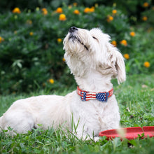 Load image into Gallery viewer, Bowknot America Dog Collar Soft Puppy Dog Cat - Apollo Innovations