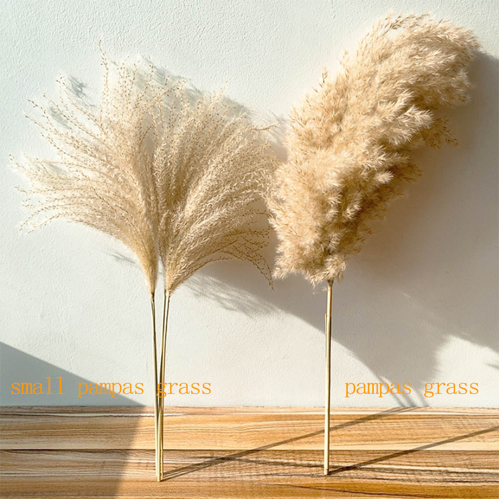 Decorative Dried Pampas Grass