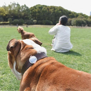 Petkit Smart Health & Fitness for Dogs - No Monthly Fees